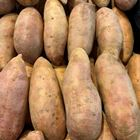 Picture of RED SWEET POTATO