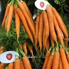 Picture of DUTCH CARROTS