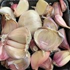 Picture of SINGLE CLOVE GARLIC