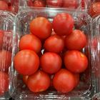 Picture of CHERRY TOMATO (punnet)