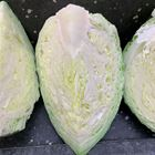 Picture of PLAIN CABBAGE CUT