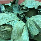 Picture of PLAIN CABBAGE