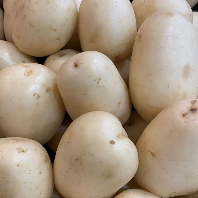 Picture of POTATO - WASHED