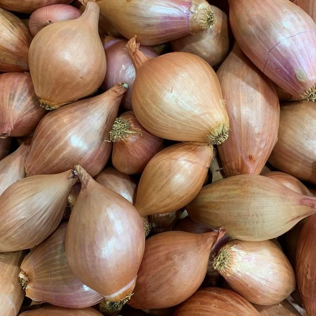 Picture of ONION - ESHALLOT