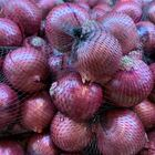 Picture of ONION - SPANISH 1KG NET