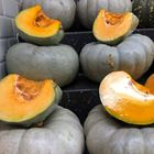 Picture of PUMPKIN - JARRAHDALE (CUT)
