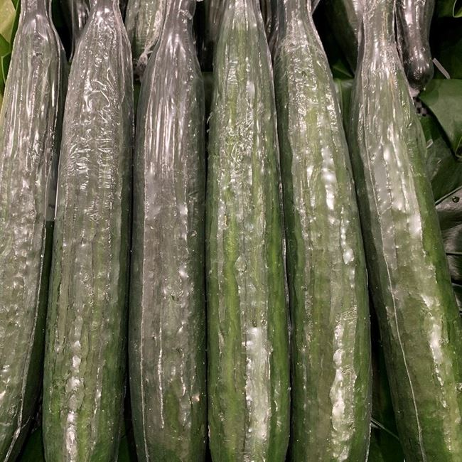 Picture of CUCUMBER - TELEGRAPH