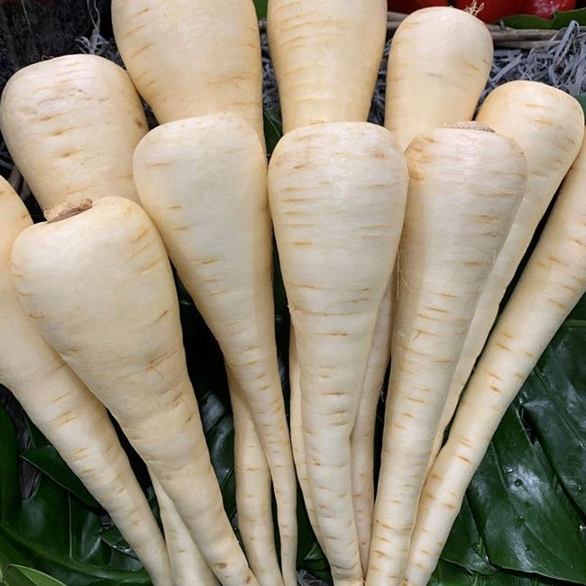 Picture of PARSNIPS