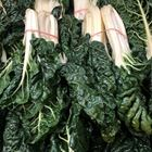 Picture of SILVERBEET