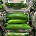 Picture of CUCUMBER - BABY (PUNNET)