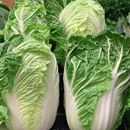 Picture of CABBAGE - CHINESE (WOMBOK)
