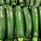 Picture of ZUCCHINI - GREEN