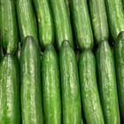 Picture of CUCUMBER - LEBANESE