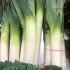 Picture of LEEKS BUNCH