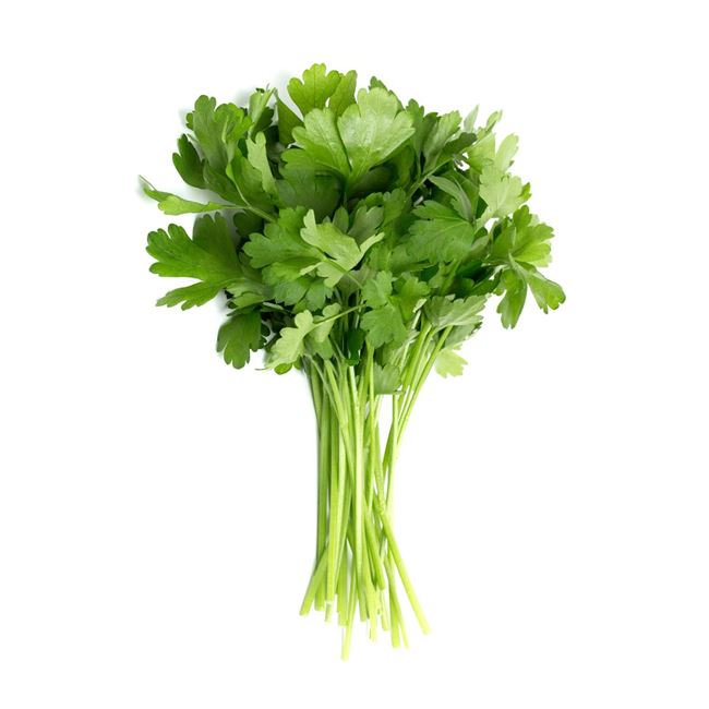 Picture of CONTINENTAL PARSLEY (bunch)