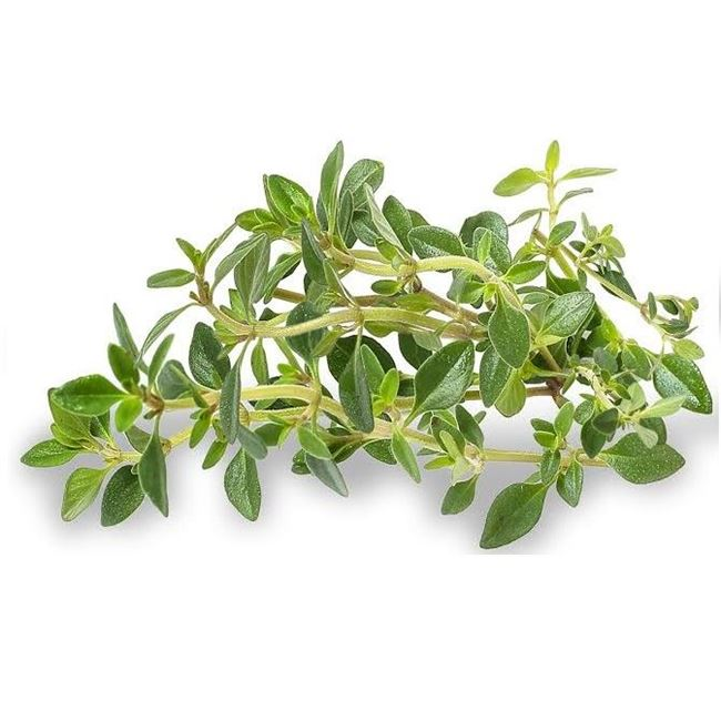 Picture of LEMON THYME (bunch)