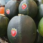 Picture of GEM SQUASH