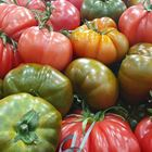 Picture of TOMATO - HEIRLOOM