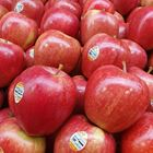 Picture of APPLE - ROYAL GALA LARGE