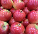 Picture of APPLE - KANZI