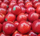 Picture of APPLE - PINK LADY LARGE