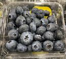 Picture of BLUEBERRIES (PUNNET)